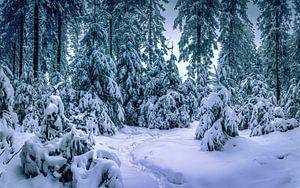 Verträumter Winter von Wim van D