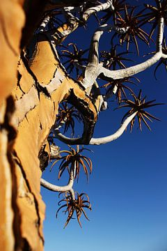 NAMIBIA ... Quiver Tree van Meleah Fotografie