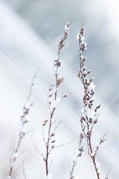 Een winterlandschap in de sneeuw von Chantal Cornet