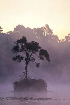 Baum im Nebel bei den Oisterwijk-Fenstern von Bas Maas