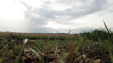 Gras van Daan Rietberg