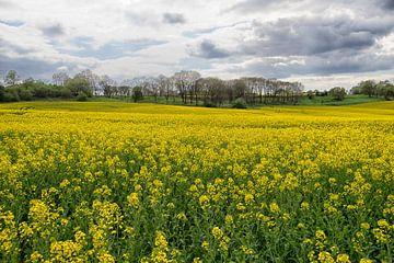 Frühlings-Ölraps-Feld von Jo Beerens