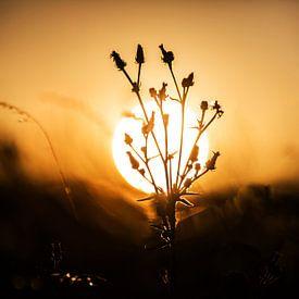 Pflanze mit Sonne im Hintergrund von Frank Herrmann