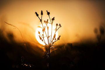 Pflanze mit Sonne im Hintergrund