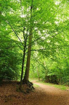 Bos in het voorjaar van Corinne Welp