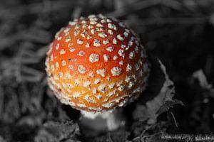 Kleine paddestoel rood met witte stippen van