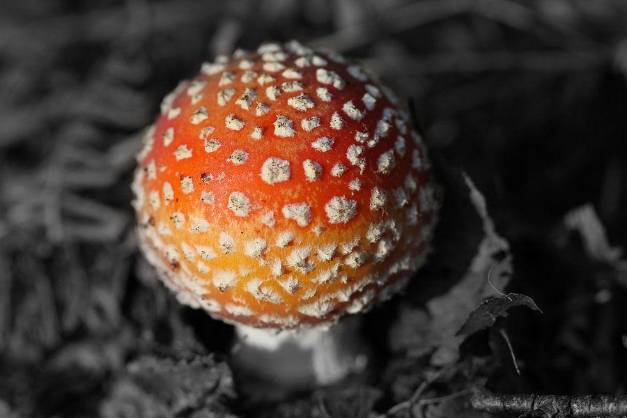 Kleine paddestoel rood met witte stippen van Jan van Kemenade