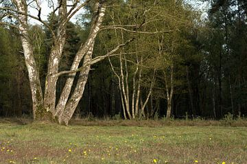 Landschap 25