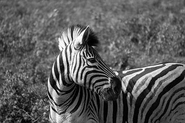 Close-up van een zebra in Zuid-Afrika van Reis Genie