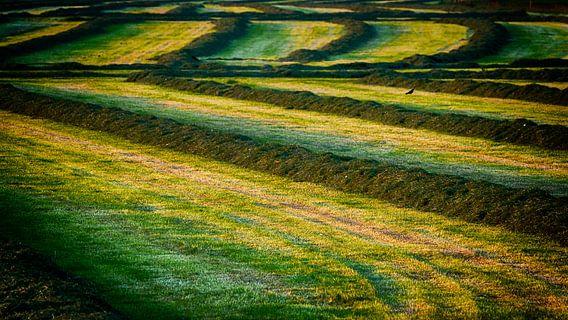 Gemaaid gras op het platteland van Vathorst