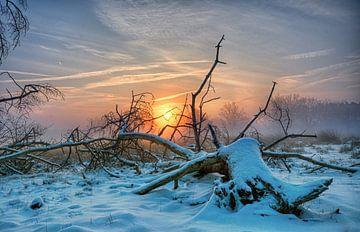 Foggy sunrise 3 von Natascha IPenD