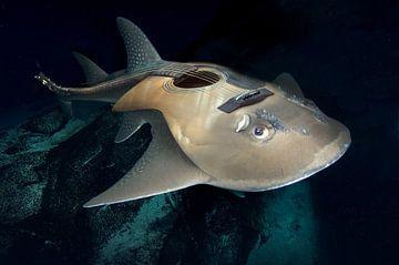 guitaar vis van Dray van Beeck