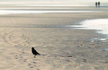 Beach Bird van Nicole Nagtegaal