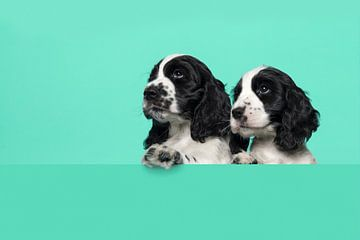 Cocker spaniel puppies van Elles Rijsdijk
