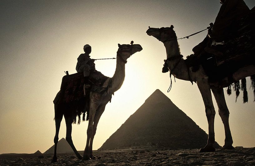 Chameaux aux pyramides de Gizeh près du Caire, Egypte sur Frans Lemmens