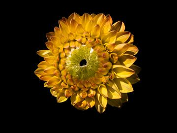 Gele bloem van Anne Stielstra