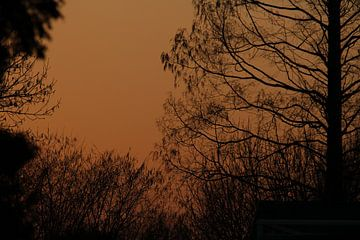 Voorzomer zon