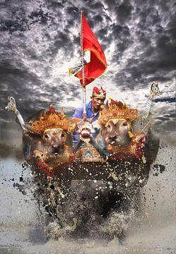 Water buffel race. van Dray van Beeck