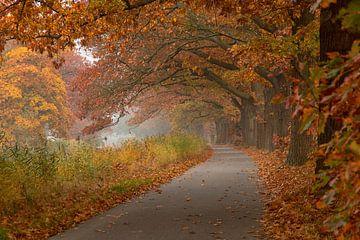 Fiets pad onder eikenbomen sur