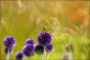 libelle op bloem van