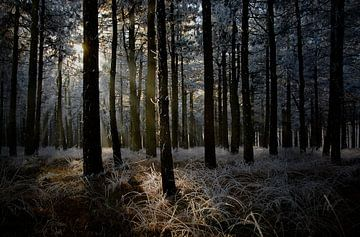 Forrest View von Wim Schuurmans