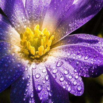 De zon in de bloem von de buurtfotograaf Leontien