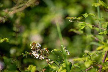 Nahaufnahme Schmetterling auf Blumen von Percy's fotografie