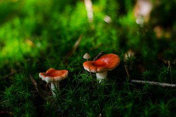 Op een grote paddenstoel, rood met witte stippen van Hans Peter Debets