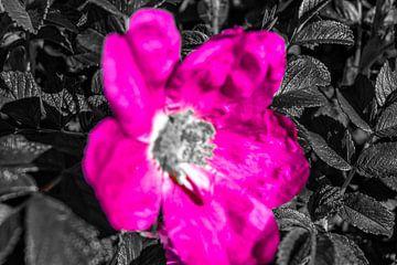 Roze zwarte  bloem von Jane Changart