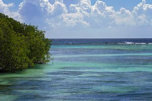 mangrove op malmok beach