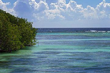 mangrove op malmok beach van gea strucks