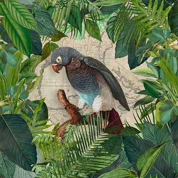 Tropische reis van de papegaai van Andrea Haase