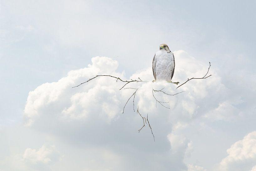 Sky is the limit van Hannie Kassenaar