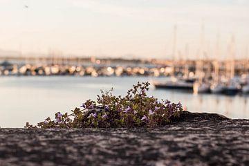 Sardinien | im Hafen von Sylvana Portier