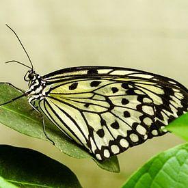 Butterfly van Marjo Kusters
