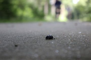 Rettet den Käfer! von DVT Photography