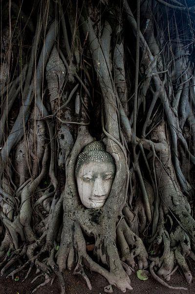 Buddha in boom van Sebastiaan Hamming