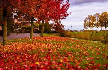 Herfst esdoorn bed van bladeren van Gea Gaetani d'Aragona