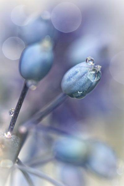Underneath A Blue & Cloudless Sky ... (bloem, blauwe druifjes) van Bob Daalder