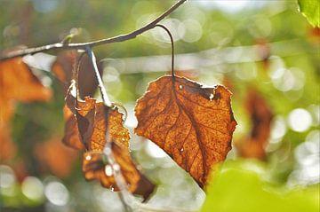 Herfst in de Zon van DoDiLa Foto's