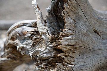 Aangespoelde en verweerde boom van Arjen Tjallema
