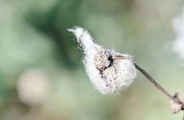 Macro photo d'une belle fleur par un jour de printemps ensoleillé ! sur Jennifer Petterson
