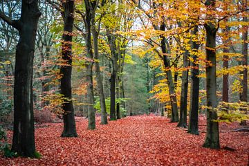 Herbst im Wald. von Victoria Barberien