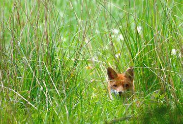 Vossenwelpje in het hoge gras van Petra De Jonge