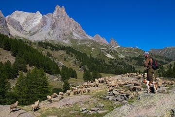 Hirte in den französischen Alpen 2 von Dennis Wierenga