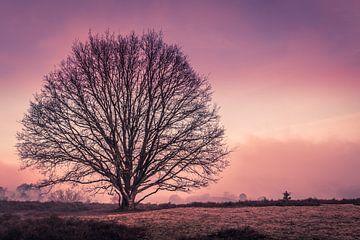 purple van Simone Wind