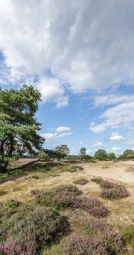 Heide Panorama Zuiderheide Laren NH van Martin Stevens