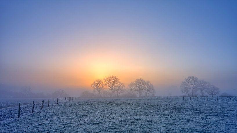 Winterlandschap met bomen tijdens zonsopkomst van Peter Bolman