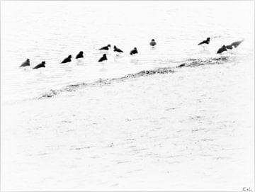 Birds. von Esh Photography
