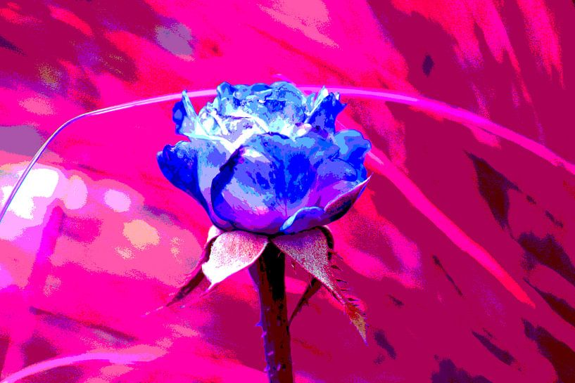 Blue rose van Joke Gorter